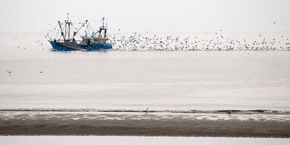 Vissersboot op de Waddenzee bij Texel, met zwermen meeuwen