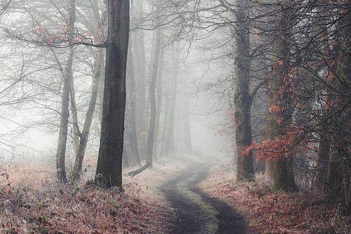 Bosweg in de mist