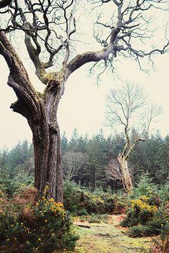 Een Oeroud Bos in Ierland van