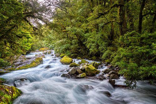 Ruige rivier door het bos van