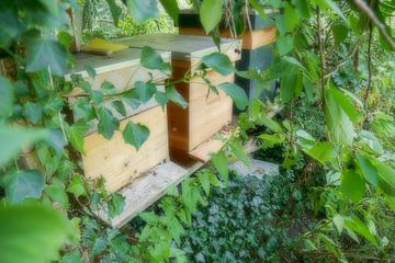 Utrecht - Bijenkasten miniatuur opname van Wout van den Berg