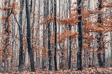Magical forest van Rik Verslype