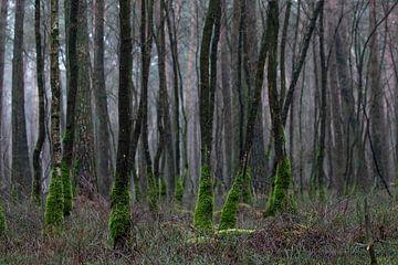 Mystiek bos met mos op de stammetjes van Bas Ronteltap