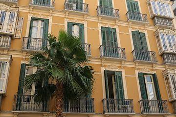 gebouw met palm in malaga von Frans Versteden
