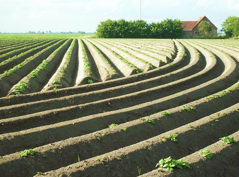 Aardappelruggen van Titia Buren