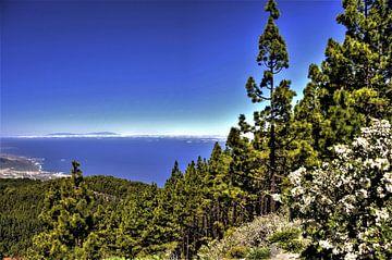 Natuur op TENERIFE    prachtige wildgroei en Kanarise dennen in helder blauwe lucht met zicht op het van Willy Van de Wiele