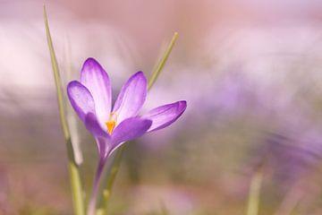 Spring awakening van