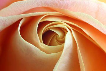 roos van Bert ten Brink