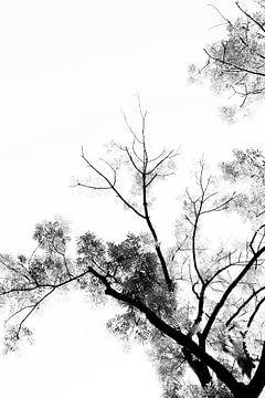 Schwarzer und weißer Druck | Baum im Wald mit klarem Himmel von Wendy Boon