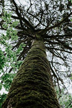 Hoge boom van Jessica Arends