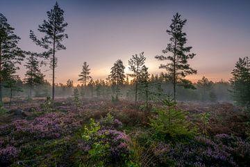 Een nieuw bos van Yvonne Albe