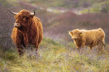 Wildlife von Dirk van Egmond