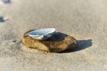 Schelp op steen op het strand van Ad Jekel