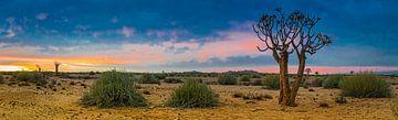 Panoramafoto van de Kalahari woestijn met kokerboom, Namibië van Rietje Bulthuis