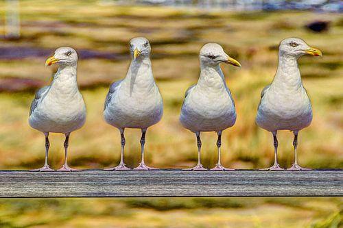 Nederlandse Zeemeeuwen op een rij