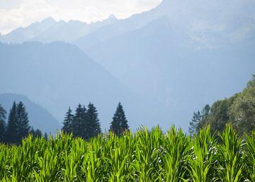 Bergen achter maisveld, Dellach im Drautal, Oostenrijk van Rinke Velds