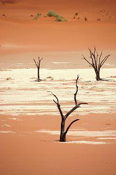 NAMIBIA ... Deadvlei III von Meleah Fotografie
