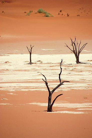 NAMIBIA ... Deadvlei III