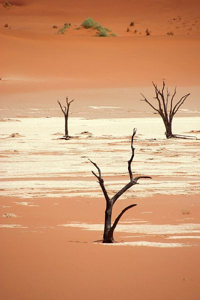 NAMIBIA ... Deadvlei III van Meleah Fotografie