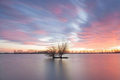 Solitaire boom bij zonsondergang van