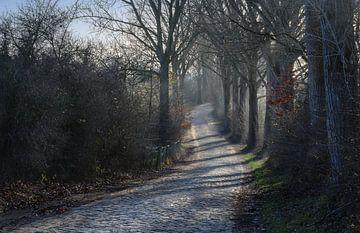 kronkelende landelijke weg met kasseien bestrating en oude bomen aan de kant van de weg in het koude van Maren Winter
