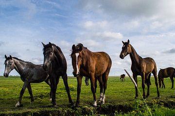 Paarden in de Wei 4 van Brian Morgan