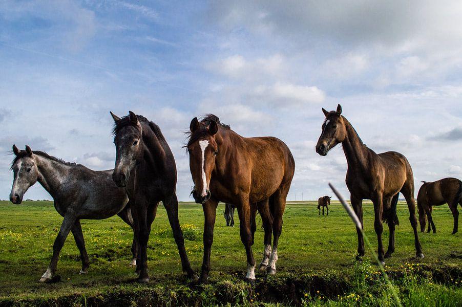 Paarden in de Wei 4