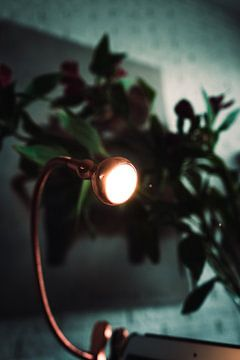 Schöne Lampe mit einer Pflanze dahinter und einem Gemälde im Hintergrund.