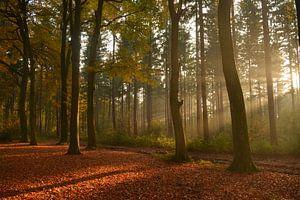 Bos met lichtstralen in de herfst