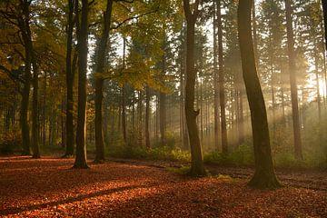 Bos met zonnestralen in de herfst van Klaas Dozeman