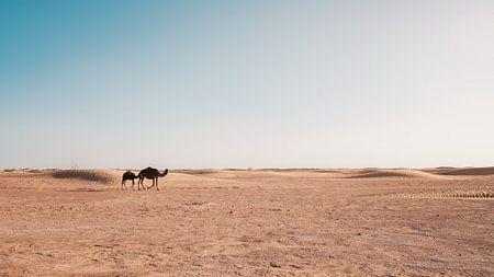 Kamelen in Marokko van Andy Troy