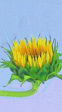 Zonnebloem kijkt omhoog van Dirk van der Ven