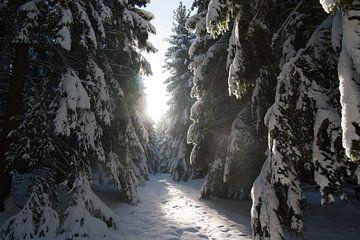 Woods in the snow van Ruby Nussy