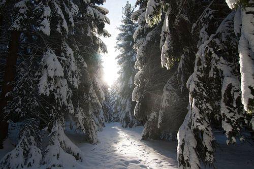 Woods in the snow van