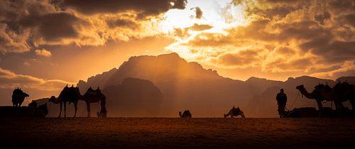 Kamelen in de namiddag van Rop Oudkerk