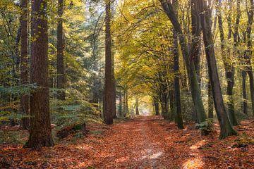 Herbstpfad durch den Wald von Cor de Hamer