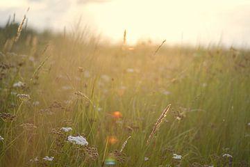 Wilde bloemen in de duinen tijdens zonsondergang von