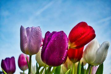 kleurijke tulpen van Mirjam Van Houten