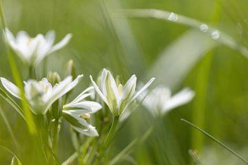 Verträumte weiße Blüten mit grüner von Janny Beimers
