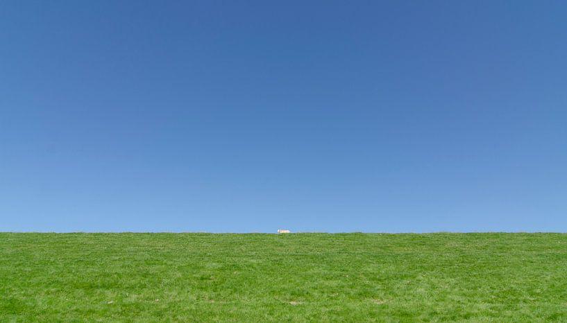 The lonely sheep. von Greet ten Have-Bloem