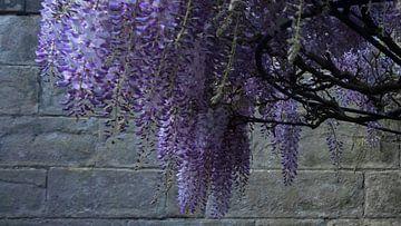 Paarse bloesem boom van Tessa Louwerens