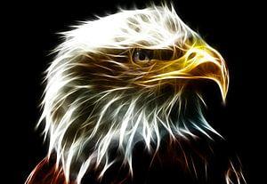 Aus dem Auge eines Adlers