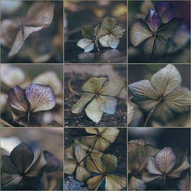 Hydrangea-collage van Rob van der Pijll