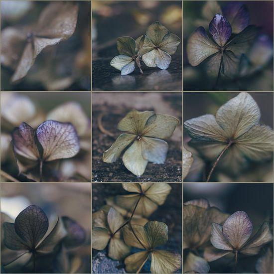 Hydrangea-collage