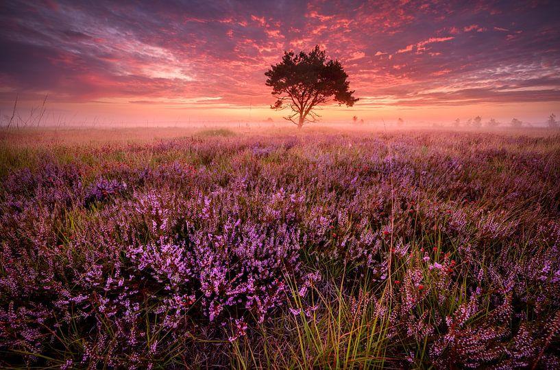 Roze zonsopkomst op de Kalmthoutse heide van Ellen van den Doel