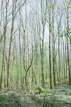 groen sur Aart Jan van Mossel