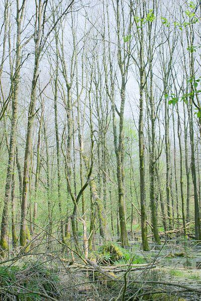 groen van Aart Jan van Mossel