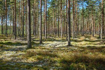 Zweden 266 van Geertjan Plooijer