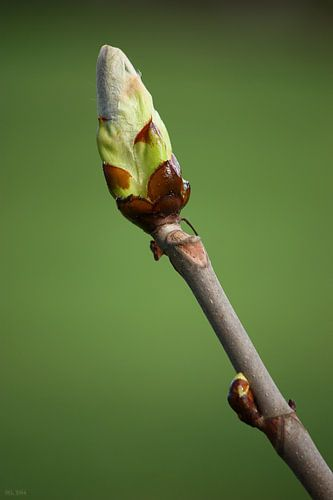 springtime awakening I van Meleah Fotografie