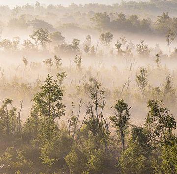 Vormittag im Korenburger Moor von Hans Monasso